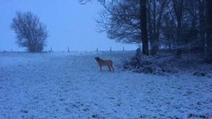 A dog enjoying the frosty weather