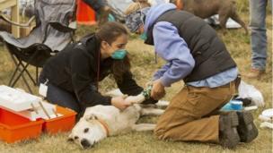 كلب في مقاطعة بوت يخضع للعلاج على يد فريق الاستجابة الطارئة للحيوانات الأليفة بعد تعرض قدمه لحرق.