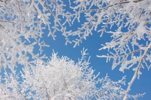 Crisp white branches against a blue sky