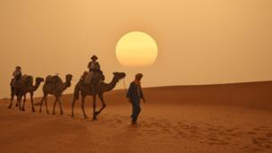 Camellos en el desierto en Marruecos.
