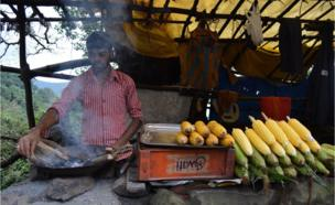 A vendor displaying sweet corn for purchase