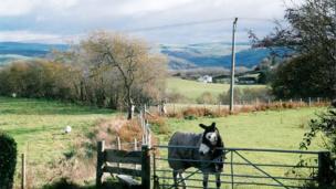A horse at Comins Coch, Aberystwyth