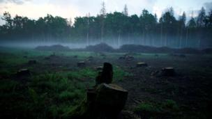 Tree stumps are seen at Bialowieza Forest