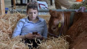 A girl checking phone at the Balmoral Show as she sits beside a cow
