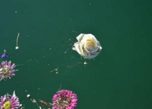 Flor sobre agua