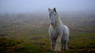 This beautiful wild pony was photographed on British Mountain, Pontypool by Clayton Greenman