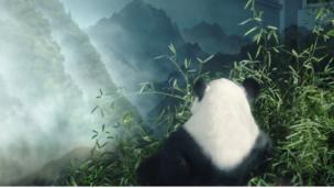 卧龙熊猫基地的大熊猫
