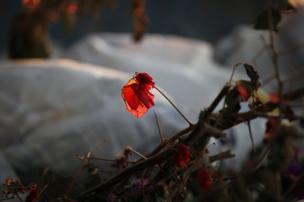 Una solitaria flor roja