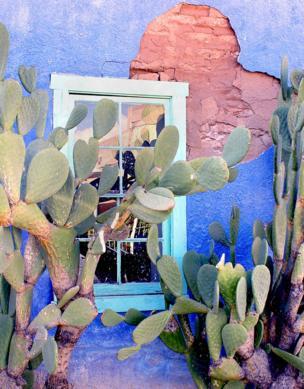 A cactus against a window