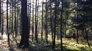 Whitestone Forest near Trellech