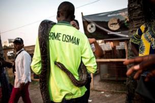 Un python exposé lors de la Foire de l'agriculture au Congo (RDC).