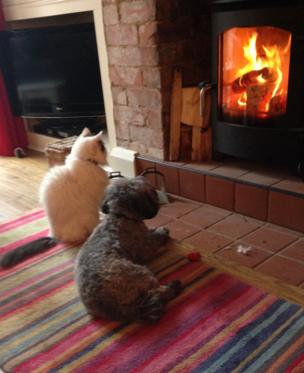 Cat and dog by the fire