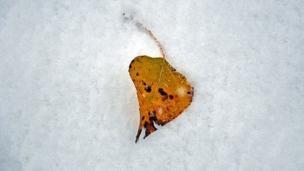 اولین بارش برف پاییزی در اهر