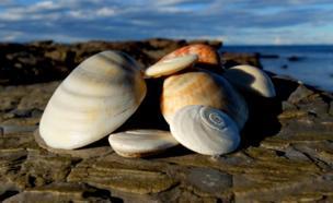 Montón de conchas en la playa