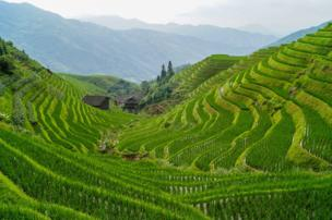 in_pictures Rice terraces in Longsheng County, Guilin, China