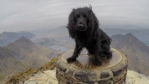 Smudge on the summit of Snowdon