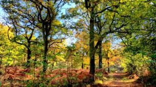 A picture taken in Brasenose Woods in mid Autumn with low angle sunshine