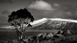 A lonely tree at Ystradfellte in the Brecon Beacons