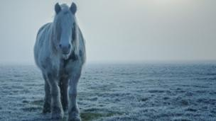 A horse on a fog-bound Port Meadow