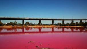 The man-made salt lake in Melbourne's Westgate Park has turned a striking bright pink in recent weeks