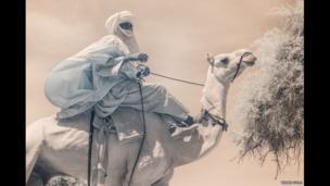 Man riding a camel