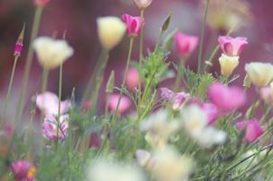 انعكاس الشمس على مجموعة من الزهور