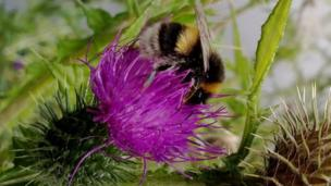 Bee collecting pollen from a flower at Gnoll Country Park, Neath, by Cerys Cole