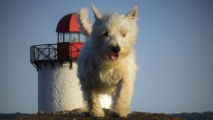 Dog in front of the Burry Port lighthouse near Llanelli