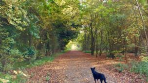 In Brasenose Woods a dog keeps watch for squirrels to chase