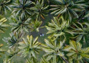 คู่รักคู่หนึ่งนอนเล่นในบรรยากาศที่ร่มรื่นล้อมรอบด้วยต้นปาล์ม บนเกาะฮูอาฮิเน ในหมู่เกาะเฟรนช์โปลินีเซีย