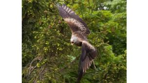 Tim Burton: Tim, who lives near Thame, took these amazing photos of a red kite