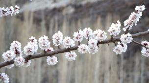 سکردو اور ہنزہ میں موسمِ بہار