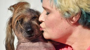 Himisaboo getting a kiss from his owner at the World's Ugliest Dog competition
