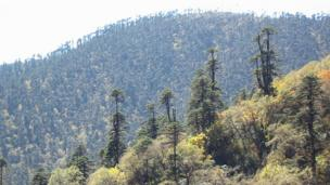 Countryside in Bhutan