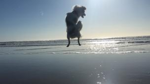 J.C the dog jumping for joy at Newgale beach in Pembrokeshire was captured by his owner 18-year-old Clementyne Stevenson.