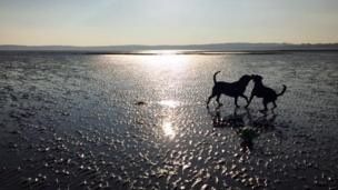 Two dogs playing on a beach