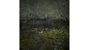 """Exposición """"Into the woods"""""""