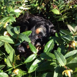 Dog in the undergrowth