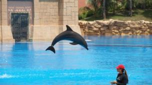 Delfín en el parque de Dolphin Bay, en Dubái, Emiratos Árabes Unidos.