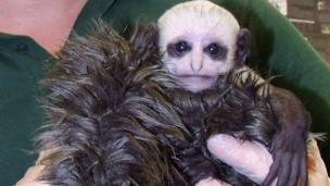 Voldemort monkey
