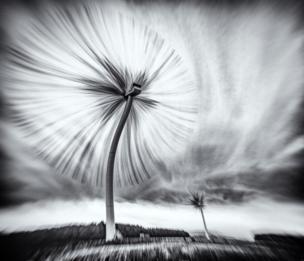 Turbo Dandelion Wind Farm
