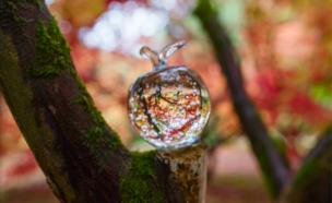 A paperweight on a branch reflects Japanese maple trees