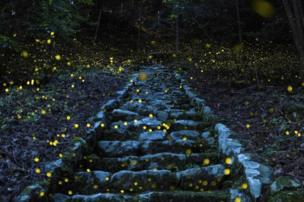 A remote village near to Tamba, Japan, was the location for Yutaka Takafuji's firefly-speckled photograph of a path up to a shrine.
