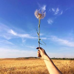 Flor al viento, de @csdelgado