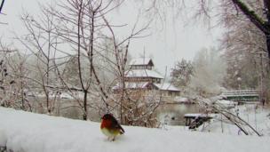 Tweet! A robin in Ebbw Vale, Blaenau Gwent