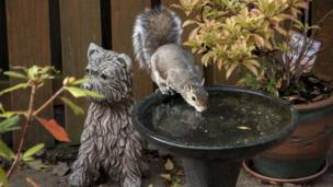 Squirrel drinking beside dog statue