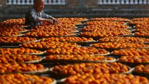 Persimmons dry on rooftops in Anxi county, Quanzhou, Fujian province