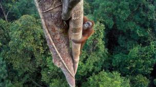 Wildlife Photographer of the Year winner