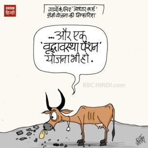 गाय का आधार क्राड