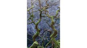 Деревья в Дербишире